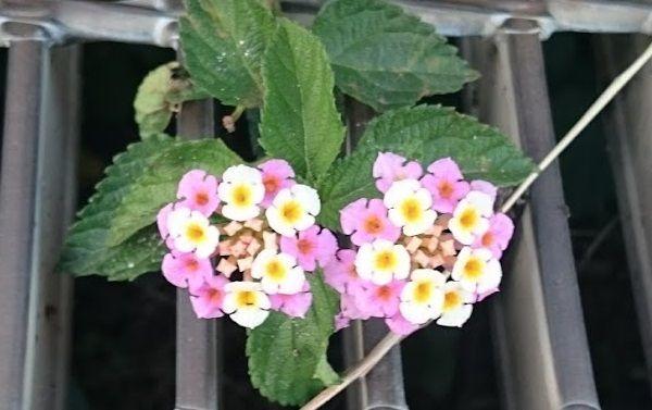 拡大したきれいな花