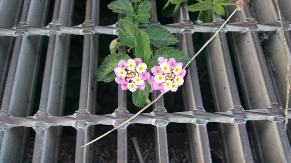 たくましい花